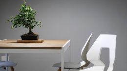 plante d'intérieur, plante nettoyer, dépoussiérer plante